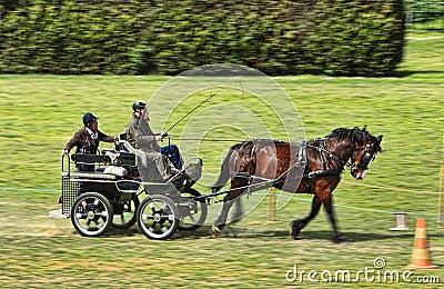 Chariot de Trec Photo stock éditorial