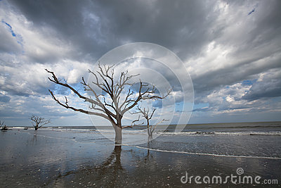 Charleston Boneyard Beach Botany Bay Edisto SC