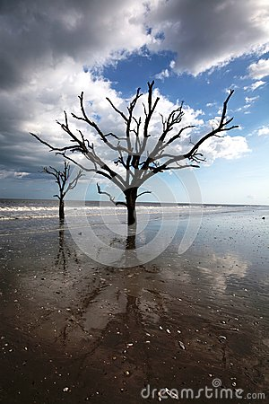 Charleston Boneyard Beach Forest Botany Bay SC