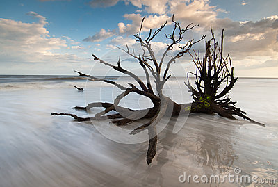 Charleston Botany Bay Boneyard Beach Edisto Island