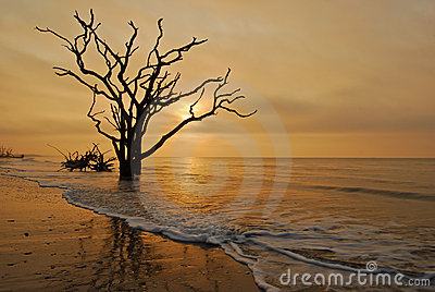 Charleston, SC Boneyard Beach Botany Bay