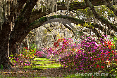 Charleston South Carolina Spring Bloom Plantation