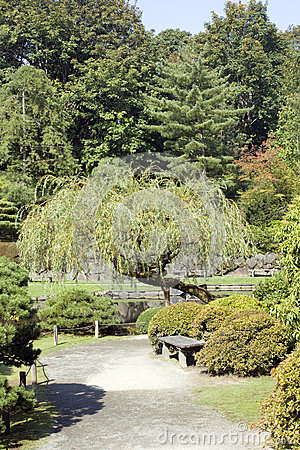 Charmig japanträdgård