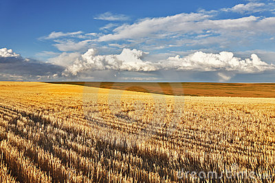 Charming pastoral landscape