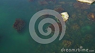 Charming Sommartid. Diver fångar fisk i alger. Undervattensfiske stock video