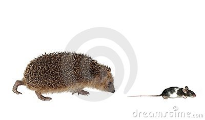 Chasing mouse hedgehog