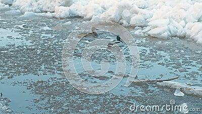 Chassoir de glace sur la rivière Haut étroit mobile de banquises Canards sur la rivière banque de vidéos