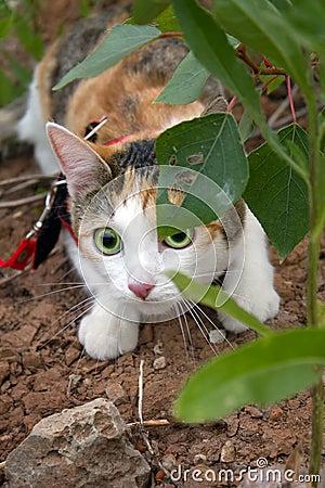 Chat animal