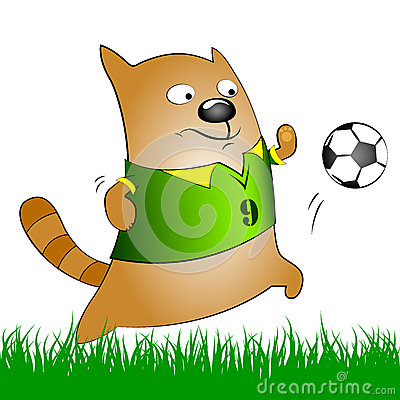 Chat avec du ballon de football