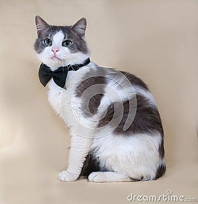 chat pelucheux avec le noeud papillon sur le fond blanc photo stock image 63205369