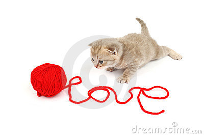 Chat d amour