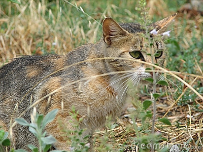 Chat dans l herbe
