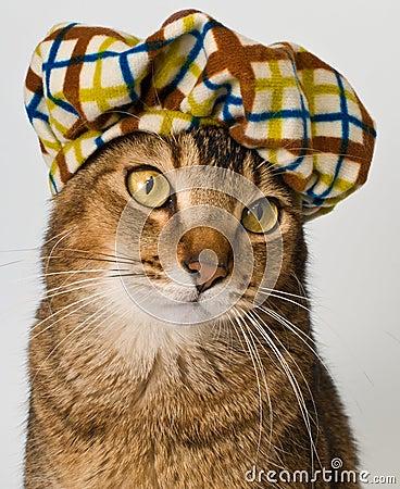 Chat dans le chapeau dans le studio