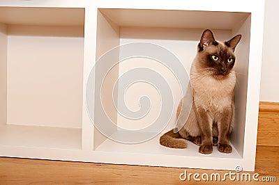 Chat dans un cadre
