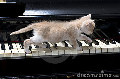 http://thumbs.dreamstime.com/x/chat-de-piano-9744175.jpg