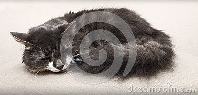Chat de sommeil