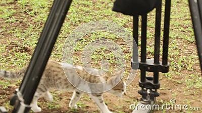 Chat en zone rurale Masai Mara Kenya Afrique banque de vidéos