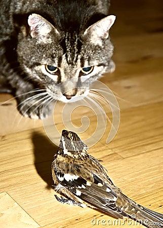 UN GRAND MOMENT DE SOLITUDE dans ANIMAUX chat-et-oiseau-de-danger-thumb11256797