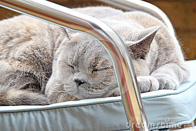 Chat faisant une sieste