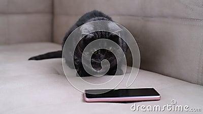 jeu pour chat telephone