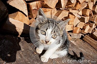 Chat mignon regardant fixement dans la lentille