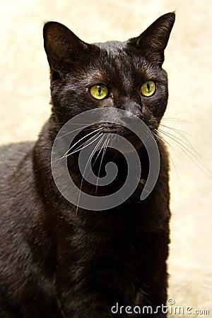 chat noir avec les yeux verts images stock image 2260994. Black Bedroom Furniture Sets. Home Design Ideas