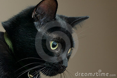 Chat noir triste
