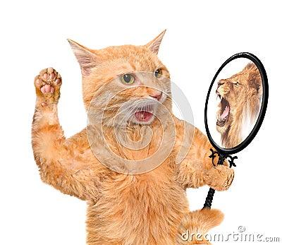 Chat regardant dans le miroir et voyant une r flexion d 39 un for Regard dans le miroir