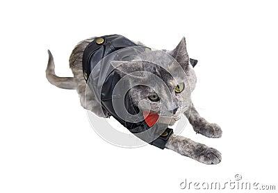 Chat sur le vagabondage
