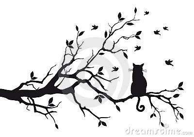 Chat sur un branchement d arbre