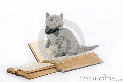Chaton britannique avec un livre.