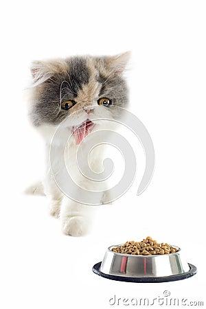Chaton et aliments pour chats persans