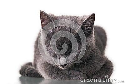 Chatreaux小猫睡觉