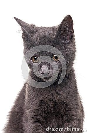 Chatreaux-Kätzchen