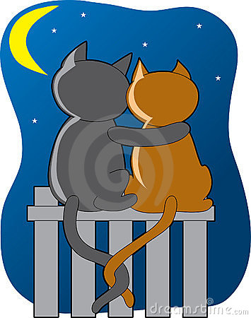 Chats dans le clair de lune
