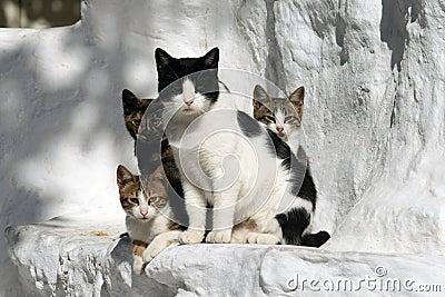 Chats Grèce