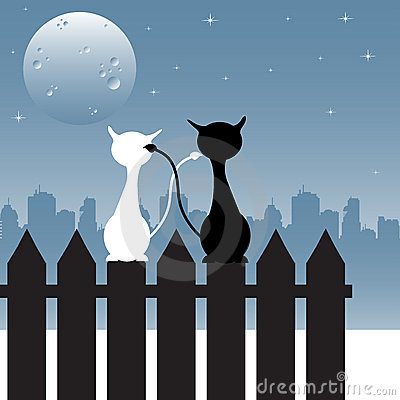 Chats regardant fixement la lune