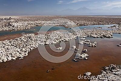 Chaxa Lagoon - Atacama Desert - Chile