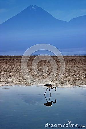 Chaxa Lagoon - Atacama Salt Flats - Chile