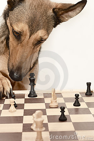 Check! Playing Chess like a dog