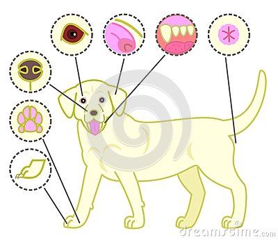 Check-points of dogs body