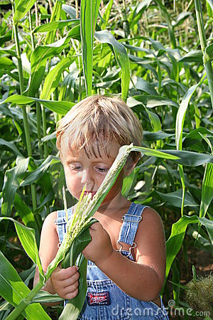 Free Checking The Crops Stock Photos - 1833423