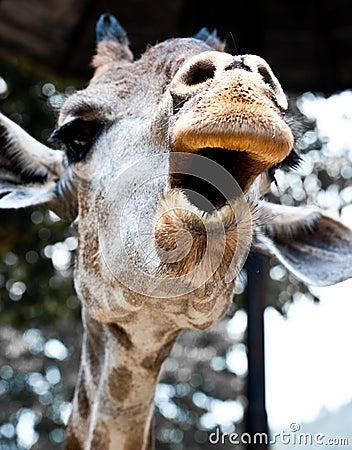 Cheer Up!  from a Giraffe