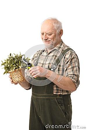 Cheerful elderly man holding plant smiling