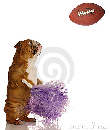 Cheerleader dog at football