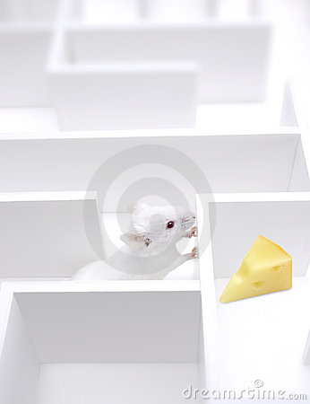 Free Cheese Finding Stock Photography - 2587832