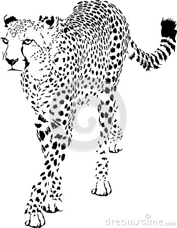 Free Cheetah Stock Images - 111364234