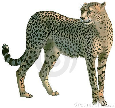 Free Cheetah Royalty Free Stock Images - 1698389