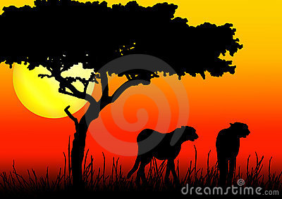 Cheetahs silhouette in sunset