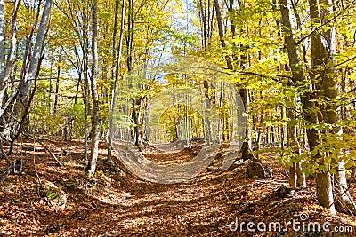 Chemin dans la forêt d automne